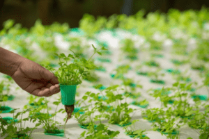Vertical Farming could help solve the Food Supply Chain Problem